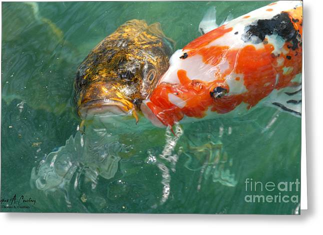 Waterlife Greeting Cards - Kissing Coy Greeting Card by Thomas Courtney