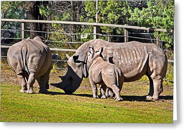 Rhinoceros Greeting Cards - Kissing mama Greeting Card by Miroslava Jurcik