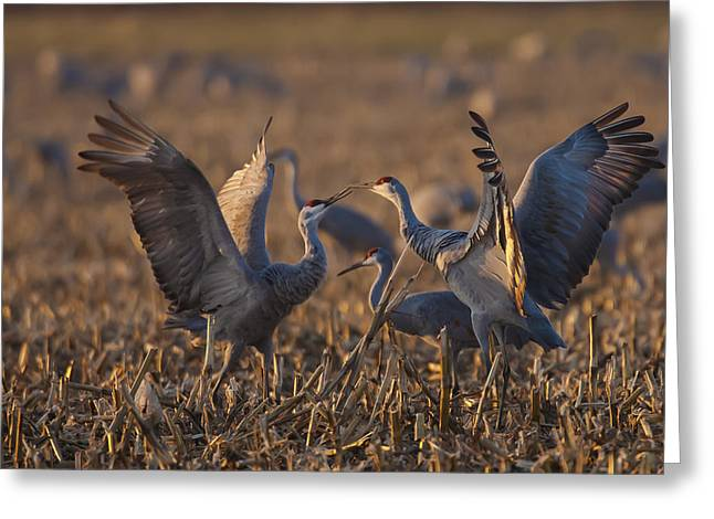 Jack R Perry Greeting Cards - Kissing Sandhills Greeting Card by Jack R Perry