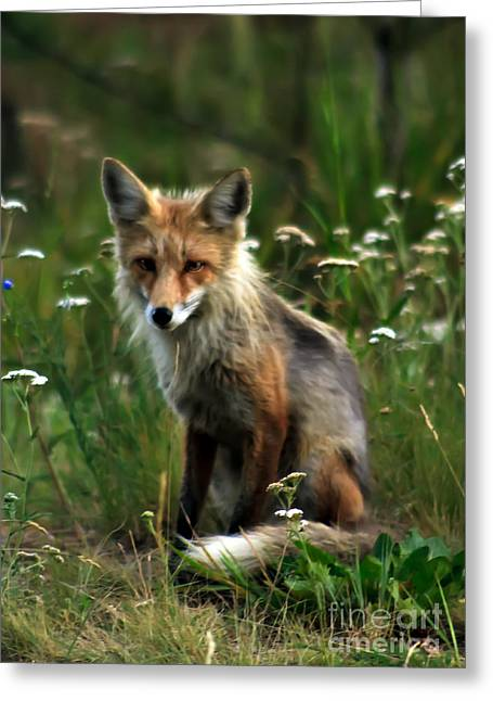 Haybale Greeting Cards - Kit Red Fox Greeting Card by Robert Bales