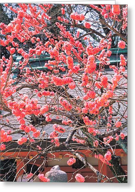 Kyoto Greeting Cards - Kitano-tenmangu Kyoto Japan Greeting Card by Panoramic Images