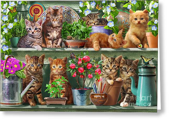 Watering Can Greeting Cards - Kitchen Cats Greeting Card by Adrian Chesterman