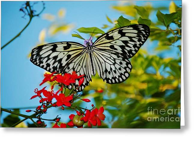 Kite Greeting Cards - Kite Butterfly Greeting Card by Peggy  Franz