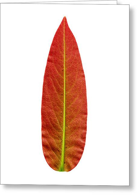 Sophisticated Greeting Cards - Kitsch leaf Greeting Card by Sumit Mehndiratta