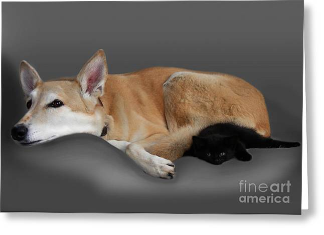 Kitten And Canine Greeting Card by Linsey Williams