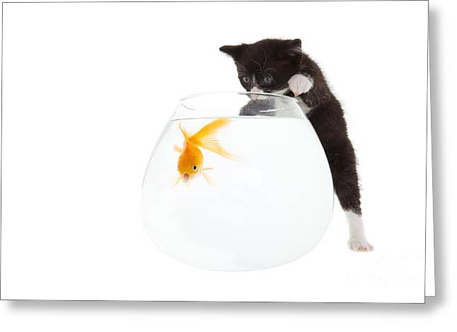 Aquarium Fish Greeting Cards - Kitten and fish Greeting Card by Steve Mcsweeny