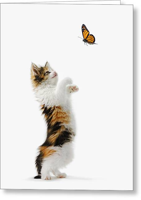 Descriptors Greeting Cards - Kitten And Monarch Butterfly Greeting Card by Thomas Kitchin & Victoria Hurst