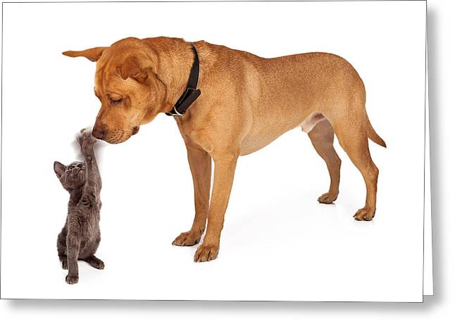 Tiny Photographs Greeting Cards - Kitten batting at nose of large breed dog Greeting Card by Susan  Schmitz