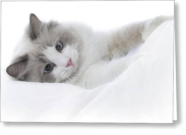 Kitten Greeting Card by David and Carol Kelly