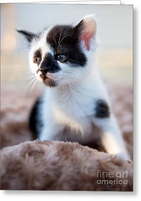 Pet And Owner Greeting Cards - Kitten dreaming Greeting Card by Iris Richardson