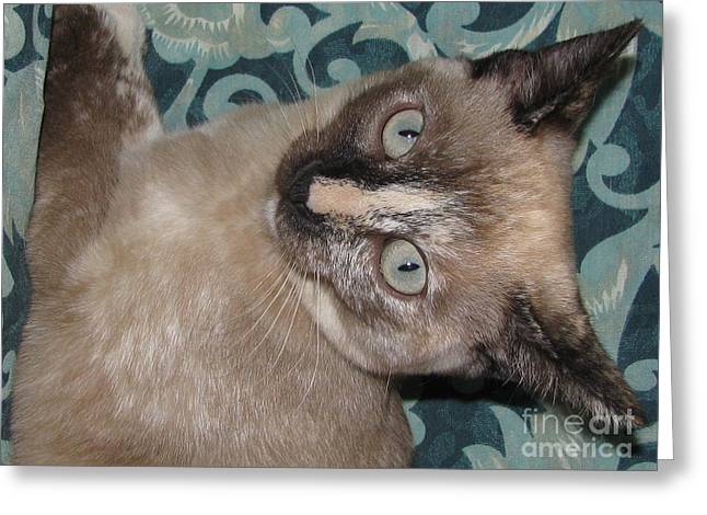 Photos Of Calico Cats Greeting Cards - Kitten   i hears something Greeting Card by Pamela Benham