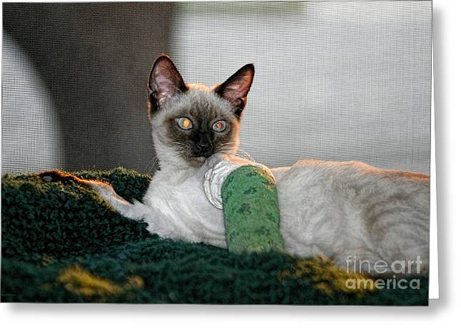 Siamese Cat Greeting Card Greeting Cards - Kitten in a Cast Greeting Card by Barbara D Richards