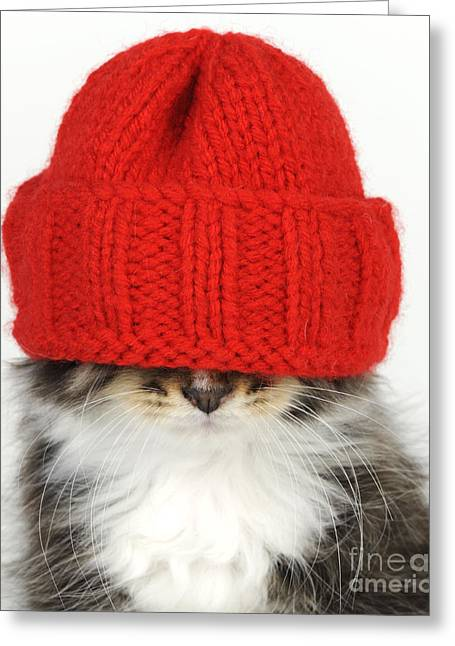Knitted Dress Greeting Cards - Kitten In A Hat Greeting Card by John Daniels