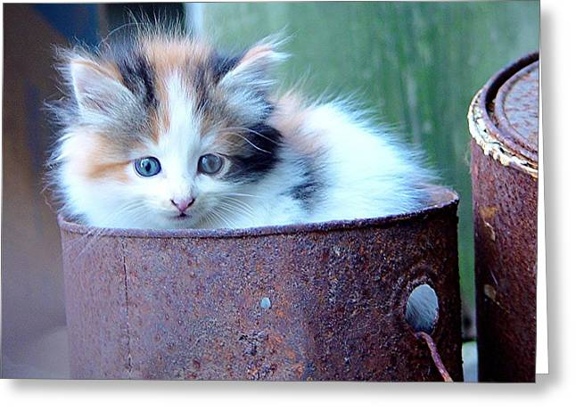Kitten Prints Greeting Cards - Kitten in an Old Paint Bucket  Greeting Card by James Scott Preston