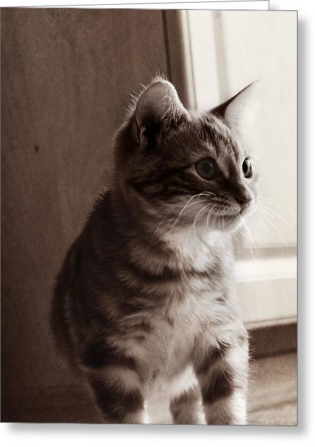 Melanie Lankford Photography Greeting Cards - Kitten in the Light Greeting Card by Melanie  Lankford Photography
