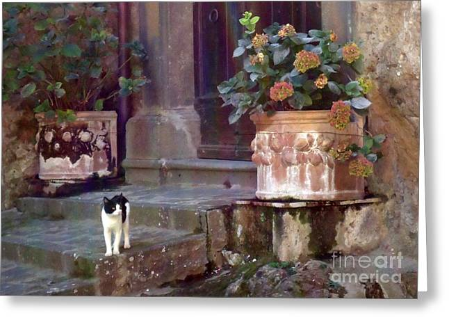 Moggy Greeting Cards - Kitten Italiano Greeting Card by Barbie Corbett-Newmin