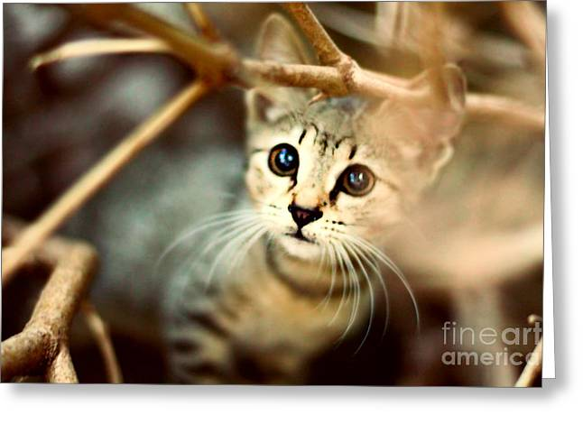 Cat Face Greeting Cards - Kitten Greeting Card by Jasna Buncic