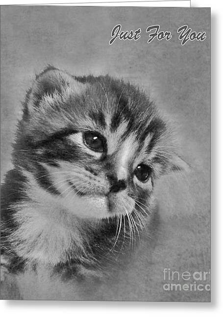 Terri Waters Greeting Cards - Kitten Just For You Greeting Card by Terri  Waters