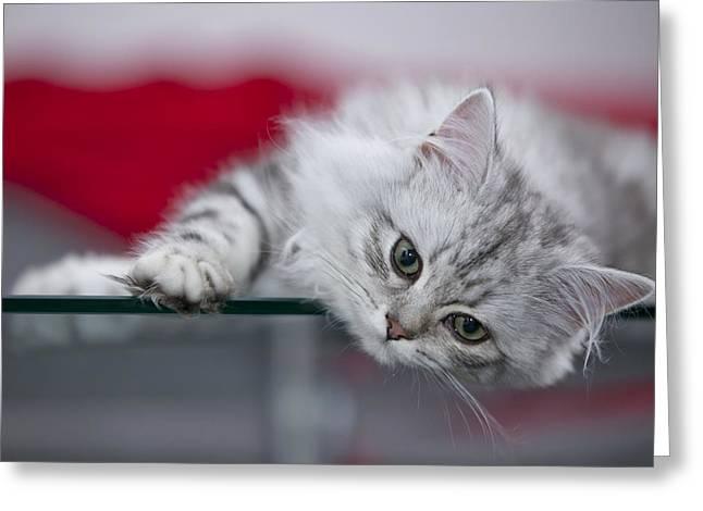 Felidae Greeting Cards - Kitten Greeting Card by Melanie Viola