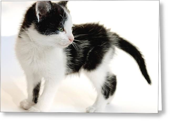7 Months Greeting Cards - Kitten Greeting Card by Melinda Fawver