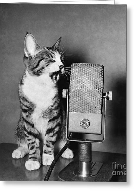 Kitten On The Radio Greeting Card by Syd Greenberg