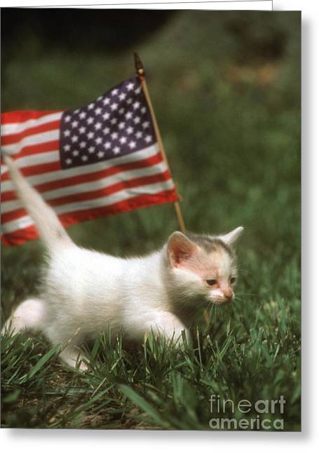 Patriotic Greeting Card Greeting Cards - Kitten With American Flag Greeting Card by Novastock