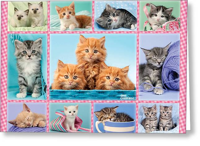 Sleeping Animals Greeting Cards - Kittens Gingham Multi-pic Greeting Card by Greg Cuddiford