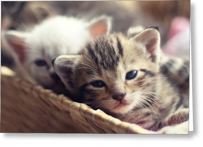 Pictures Of Cats Greeting Cards - Kittens in a Basket Greeting Card by Amy Tyler