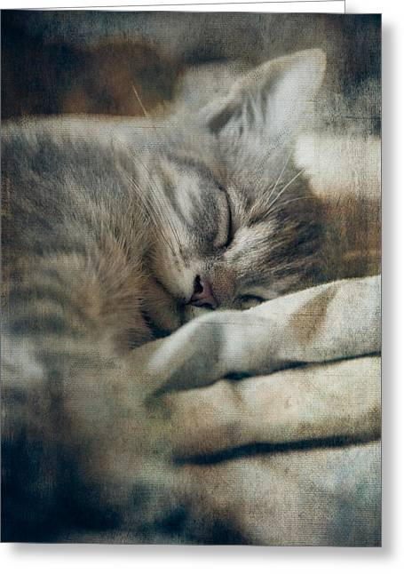 Brightness Greeting Cards - Kittens Sweet Dream #01 Greeting Card by Loriental Photography
