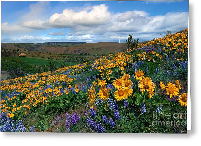 Kittitas Valley Greeting Cards - Kittitas Valley Color Explosion Greeting Card by Mike  Dawson