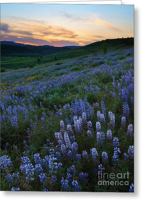 Kittitas Valley Greeting Cards - Kittitas Valley Spring Greeting Card by Mike  Dawson