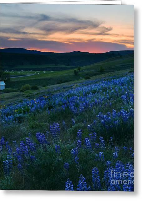 Lupine Greeting Cards - Kittitas Valley Sunset Greeting Card by Mike  Dawson