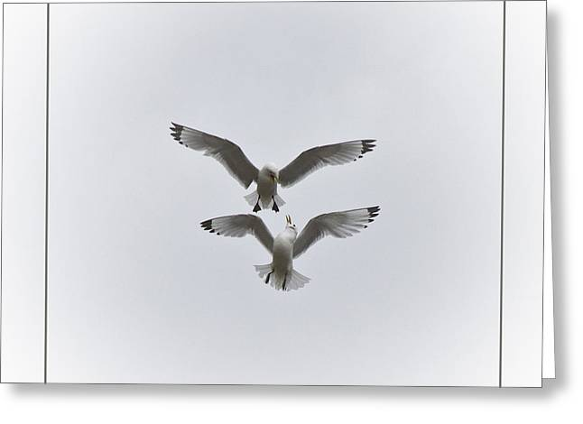 Flying Seagull Greeting Cards - Kittiwakes Dancing in the Air Greeting Card by Heiko Koehrer-Wagner