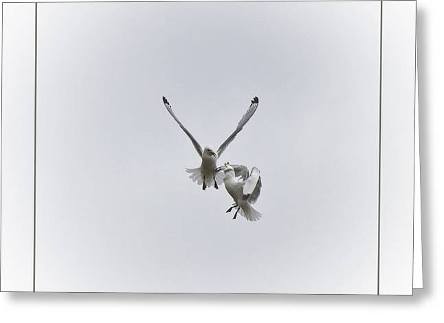 Kittiwakes Flight Greeting Card by Heiko Koehrer-Wagner