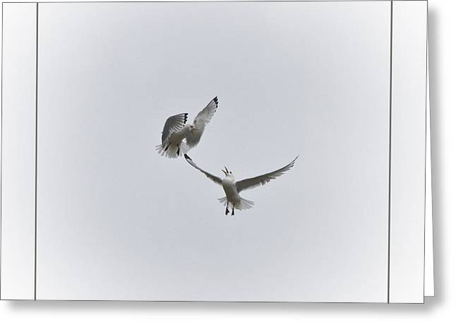 Kittiwakes Greeting Card by Heiko Koehrer-Wagner