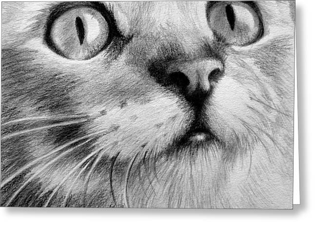 Drawings Of Cats Greeting Cards - Kitty Cat Greeting Card by Eleonora Perlic