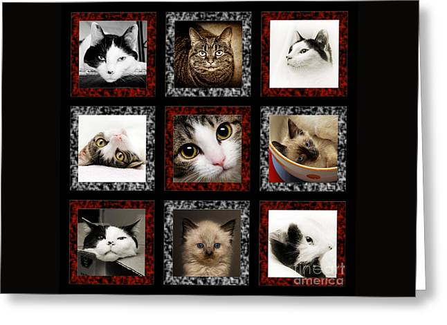 Puss Greeting Cards - Kitty Cat Tic Tac Toe Greeting Card by Andee Design