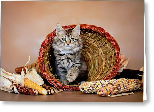 Gray Hair Greeting Cards - Kitty Cornucopia - Animal Rescue Portraits Greeting Card by Andrea Borden