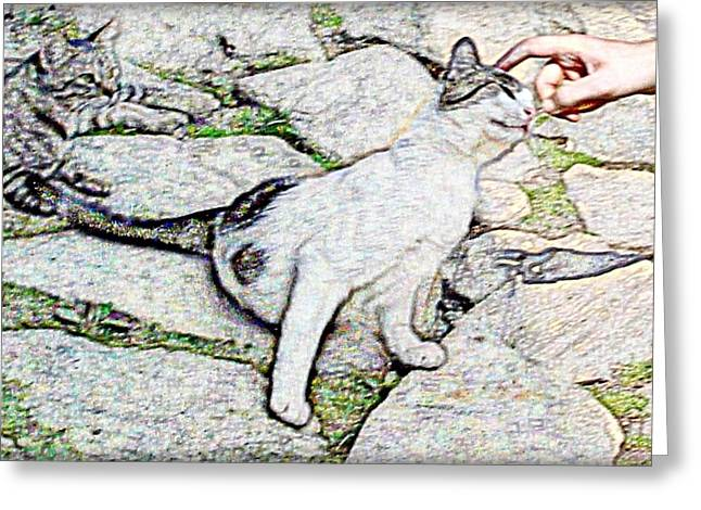 Kitten Prints Greeting Cards - Kitty Greeting Card by Dana G