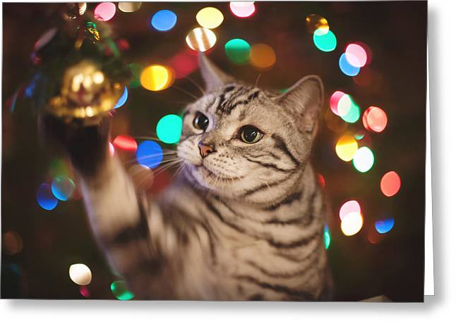 American Shorthair Greeting Cards - Kitty In The Lights Greeting Card by April Reppucci