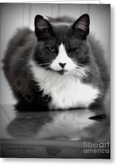 Lainie Wrightson Greeting Cards - Kitty on a Car Greeting Card by Lainie Wrightson