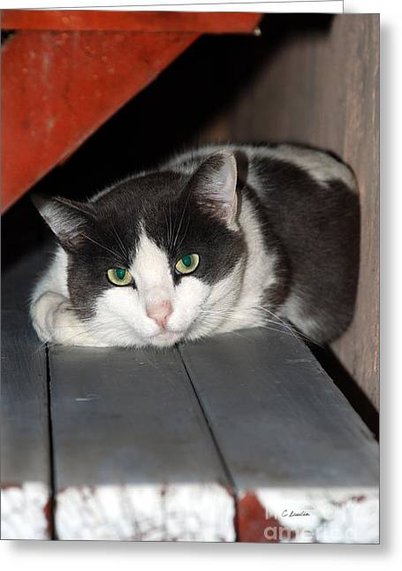 Customizable Greeting Cards - Kitty Relaxing On Bench Greeting Card by Claudia  Ellis