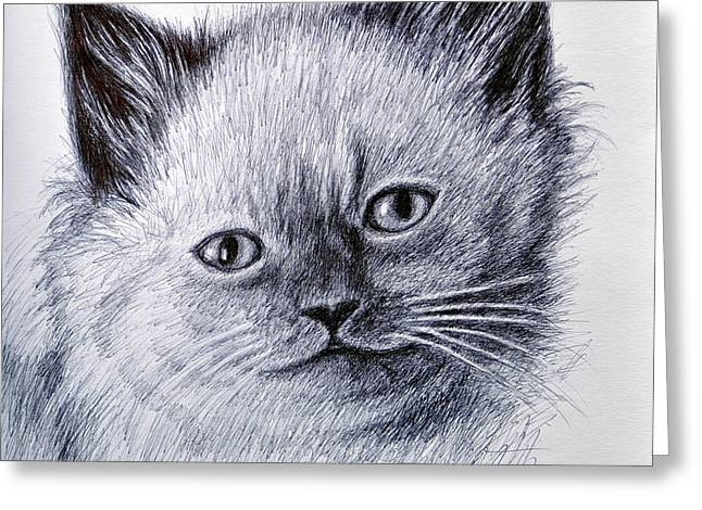 Pictures Of Cats Drawings Greeting Cards - Kitty Greeting Card by Rick Hansen
