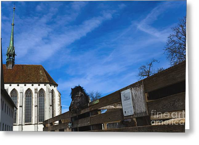 Kloster Greeting Cards - Kloster Koenigsfelden Greeting Card by Maria Bobrova