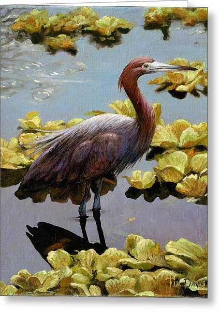 Tricolored Greeting Cards - Knee Deep Greeting Card by Tim Davis