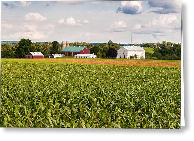 Lancaster Fine Arts Greeting Cards - Knee High Corn Greeting Card by Jim Thompson