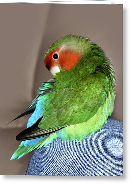 Rosy-faced Lovebird Greeting Cards - Knee Preen Pickle Greeting Card by Terri  Waters