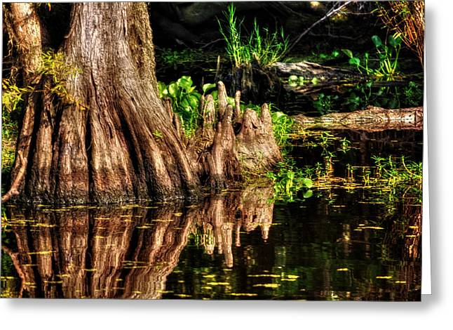 Chrystal Greeting Cards - Knees Deep in a Louisiana Bayou Greeting Card by Chrystal Mimbs