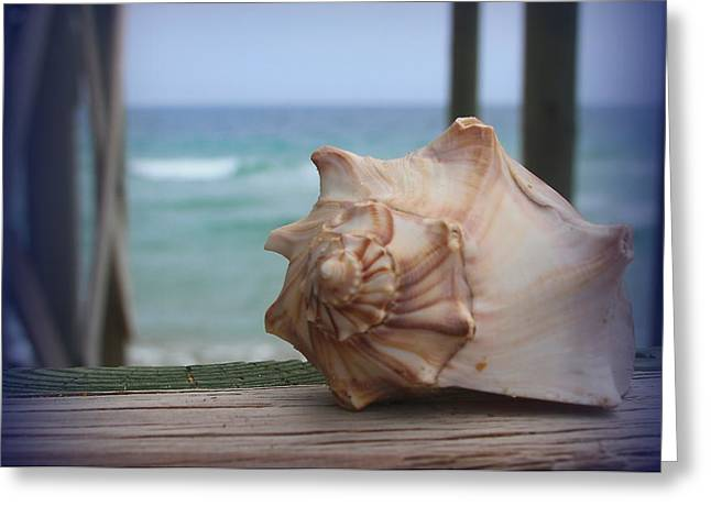 Shells Greeting Cards - Knobbed Whelk 3 Greeting Card by Cathy Lindsey
