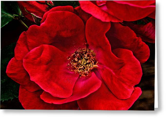 Dave Bosse Greeting Cards - Knockout Red Greeting Card by Dave Bosse